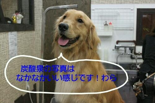 b0130018_1636579.jpg