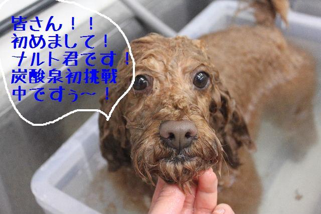竹山画伯・・・!!!!!_b0130018_19424376.jpg