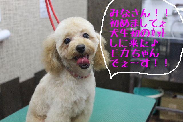 竹山画伯・・・!!!!!_b0130018_19445971.jpg