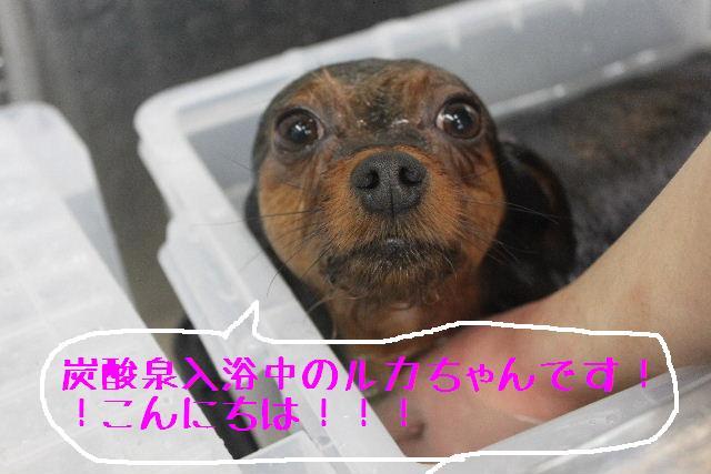 竹山画伯・・・!!!!!_b0130018_19485545.jpg