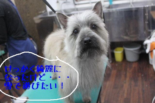 竹山画伯・・・!!!!!_b0130018_19524158.jpg