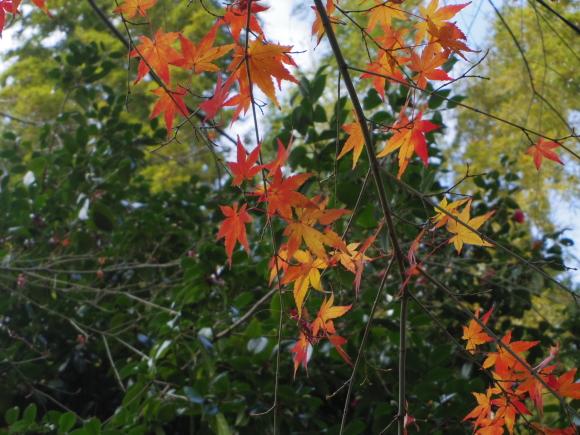 京都 5日目_f0158364_16233383.jpg