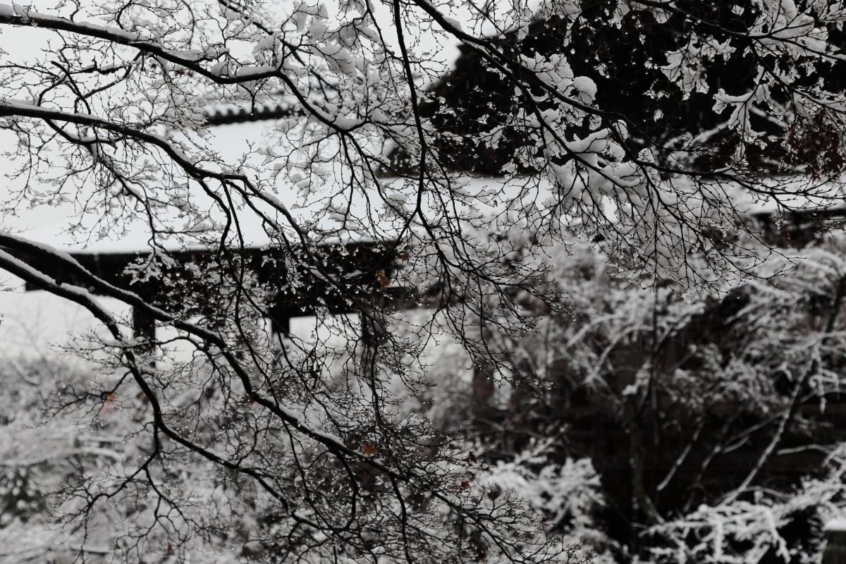 雪景色 2014 <清水寺>                        _f0021869_21485236.jpg