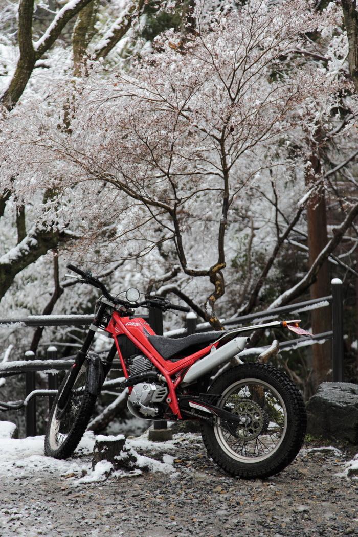 雪景色 2014 <清水寺>                        _f0021869_21521176.jpg