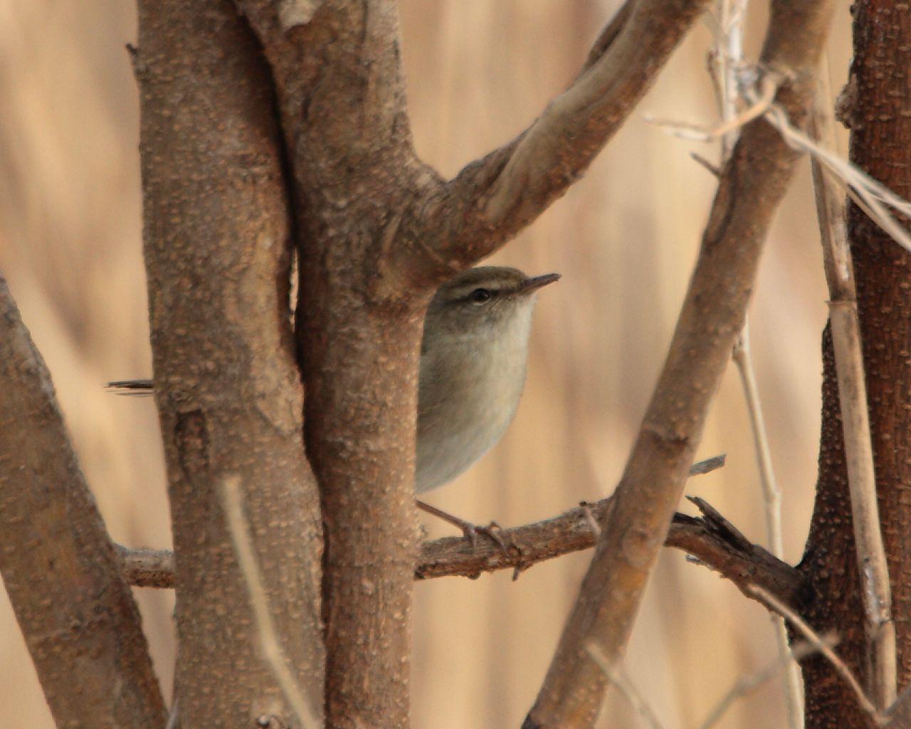 ノビタキのポイントで珍鳥発見?_f0105570_18123238.jpg
