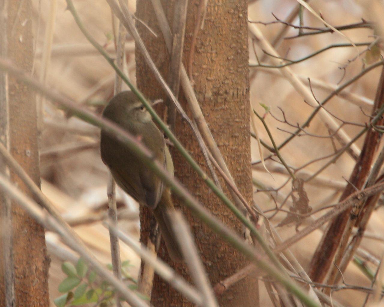 ノビタキのポイントで珍鳥発見?_f0105570_18124868.jpg