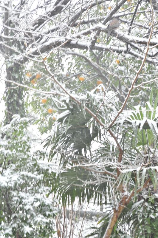 雪の日いろいろ_b0171098_929018.jpg