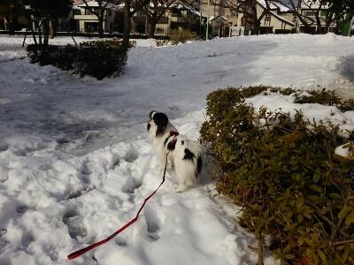 雪とおぼーちゃま達色が違いすぎますよっと。_a0155999_14101761.jpg