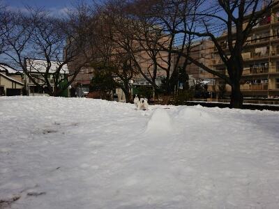 雪とおぼーちゃま達色が違いすぎますよっと。_a0155999_14114910.jpg