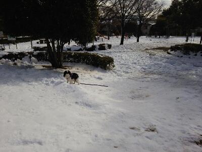 雪とおぼーちゃま達色が違いすぎますよっと。_a0155999_14125456.jpg