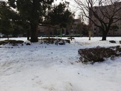 雪とおぼーちゃま達色が違いすぎますよっと。_a0155999_14155414.jpg