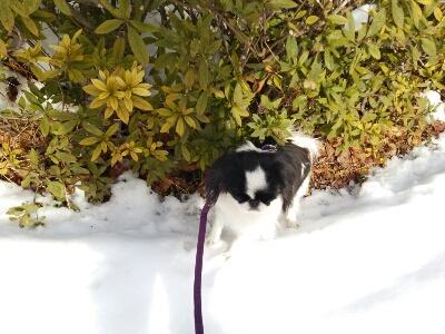 雪とおぼーちゃま達色が違いすぎますよっと。_a0155999_148284.jpg