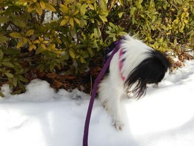 雪とおぼーちゃま達色が違いすぎますよっと。_a0155999_148385.jpg