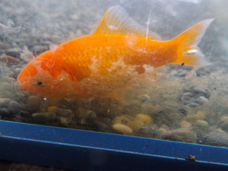 金魚が氷から解き放された午後_c0025115_20552518.jpg