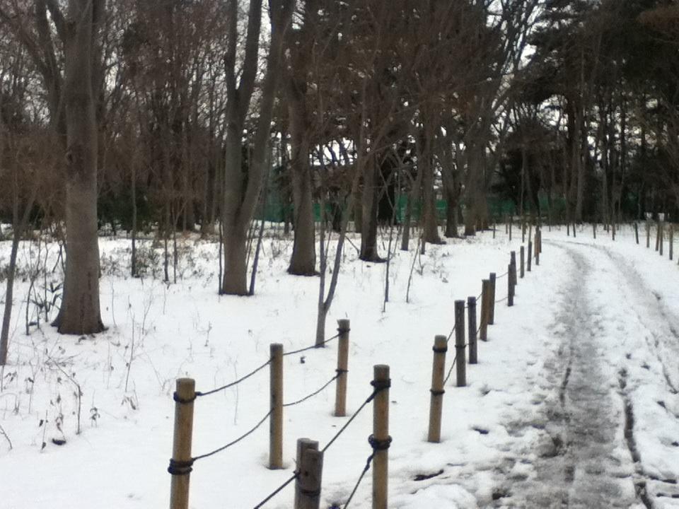 まるで雪国みたいな休日_b0255217_1720722.jpg