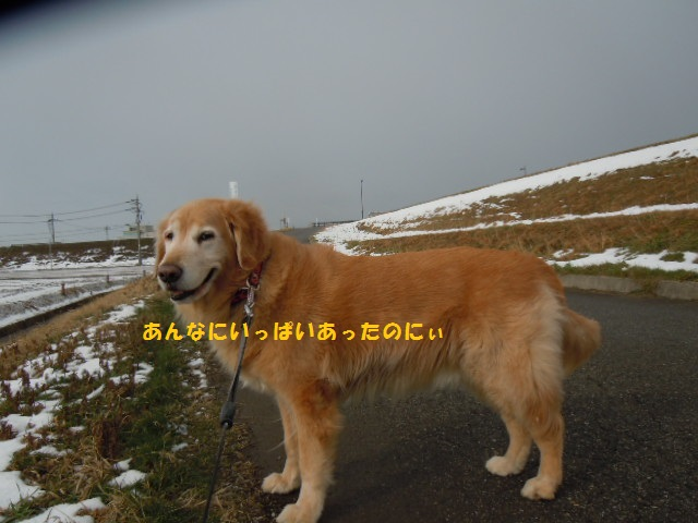 f0114128_1183178.jpg