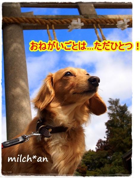 b0115642_21455551.jpg