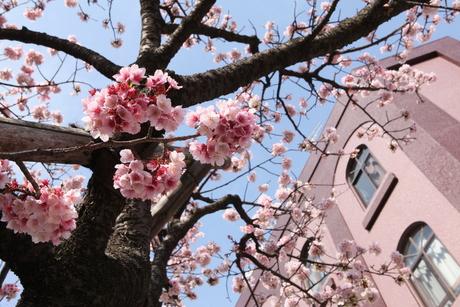 3月は熱海~_d0179447_15274935.jpg