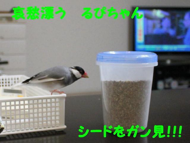 b0158061_0112175.jpg