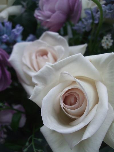 オークリーフ(紫色のラナンキュラス)_f0049672_1315457.jpg