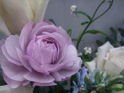 オークリーフ(紫色のラナンキュラス)_f0049672_1321410.jpg