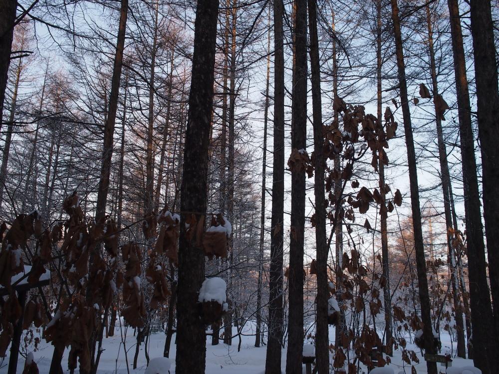 """今日はカンタベリーの木々にも""""霧氷""""が着きました。_f0276498_14343713.jpg"""