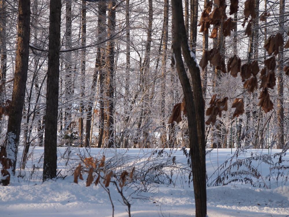 """今日はカンタベリーの木々にも""""霧氷""""が着きました。_f0276498_14352599.jpg"""