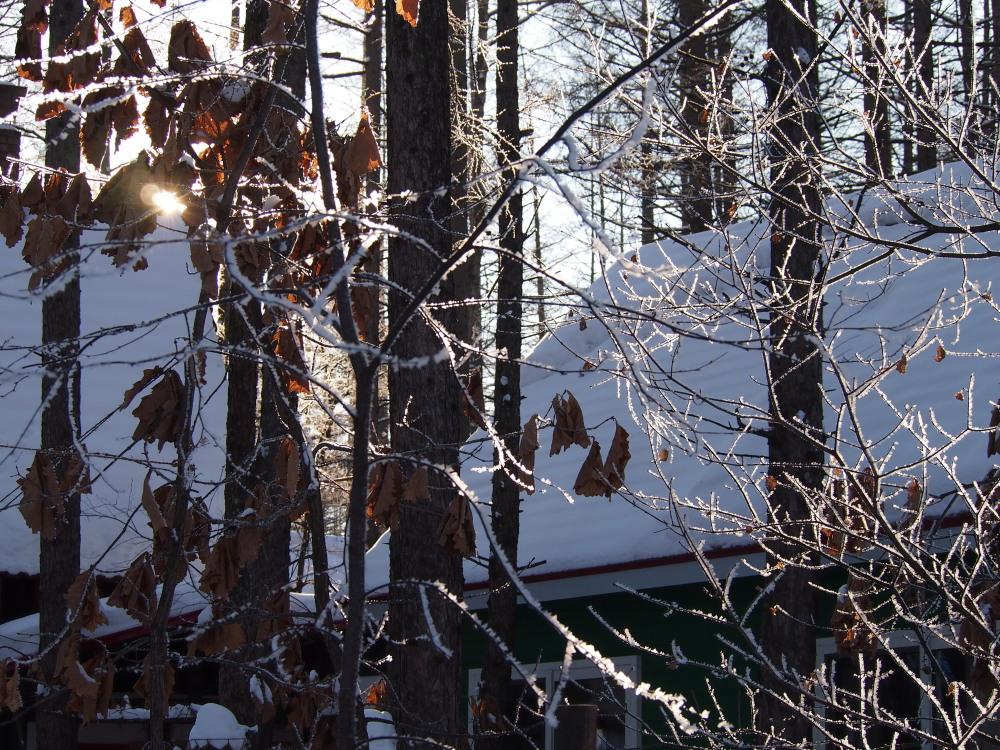 """今日はカンタベリーの木々にも""""霧氷""""が着きました。_f0276498_14365453.jpg"""