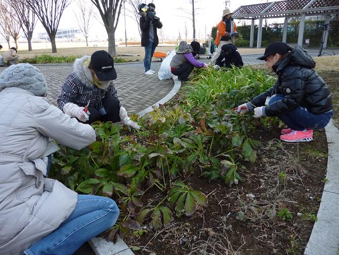 【1月22日ガーデンクラブの活動】_e0235911_16272367.jpg