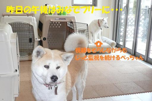 f0121712_024562.jpg