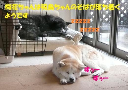 f0121712_026135.jpg