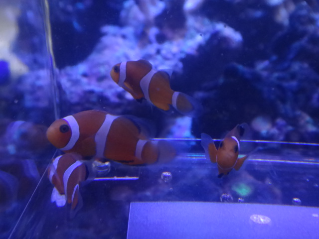 140212 海水魚・サンゴ・水草・淡水魚_f0189122_12304183.jpg