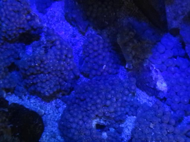 140212 海水魚・サンゴ・水草・淡水魚_f0189122_12355784.jpg