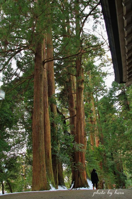 老杉のパワー_f0297537_20215823.jpg