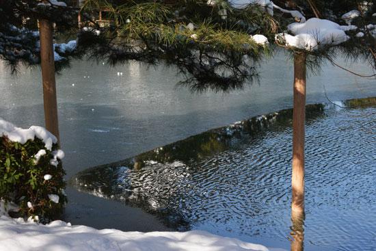 雪の兼六園(4)_c0093046_9135916.jpg