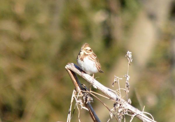 里山風景の中の野鳥_c0171849_17224192.jpg