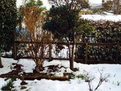 雪化粧を描く。_c0131063_1656729.jpg