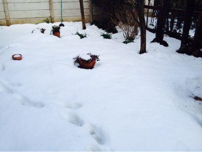 雪化粧を描く。_c0131063_1656817.jpg