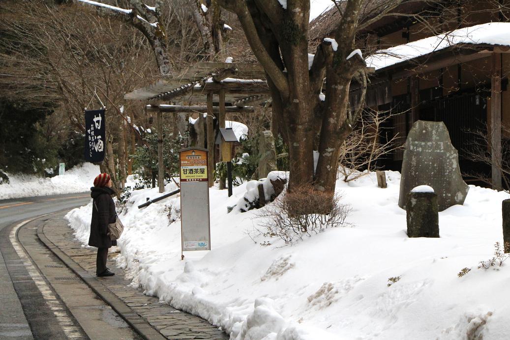 強羅公園のクリスマスローズ展_a0107574_20002704.jpg