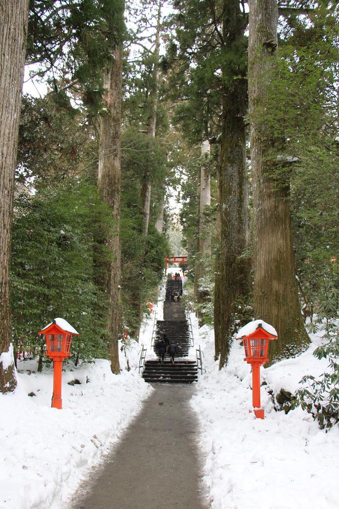 強羅公園のクリスマスローズ展_a0107574_20010477.jpg