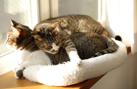 覆いかぶさる : サバとタラ
