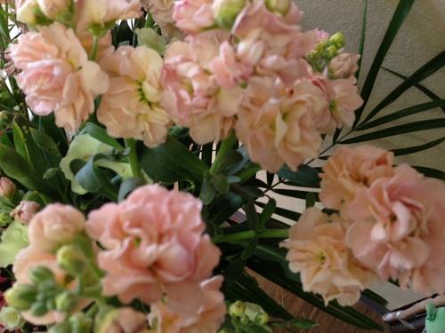 今週のお花とセール情報_a0200423_15382469.jpg