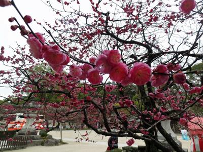 太宰府天満宮と周辺の梅 2014年2月13日_a0129233_19582299.jpg
