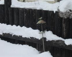 雪にもなれて・・・_d0050155_1032492.jpg