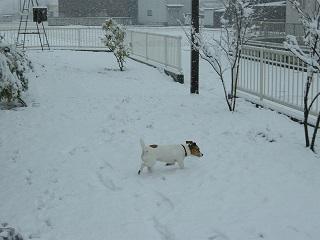:: 珍しい雪 ::_e0204865_15103690.jpg