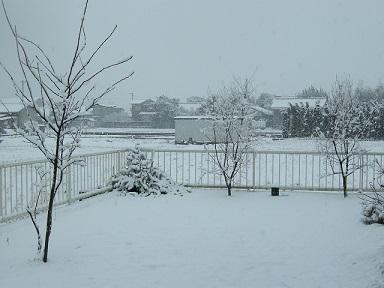 :: 珍しい雪 ::_e0204865_1532831.jpg