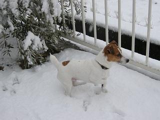 :: 珍しい雪 ::_e0204865_1582051.jpg
