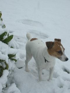 :: 珍しい雪 ::_e0204865_1592945.jpg