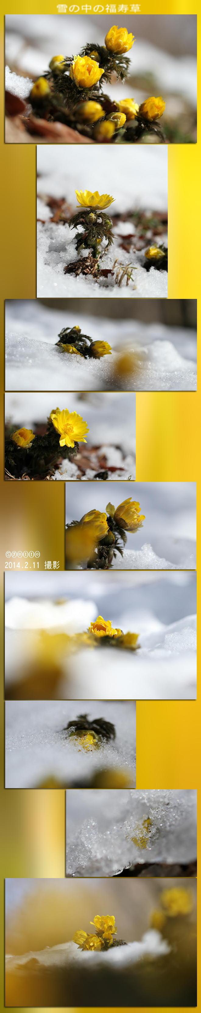 f0164592_1015258.jpg