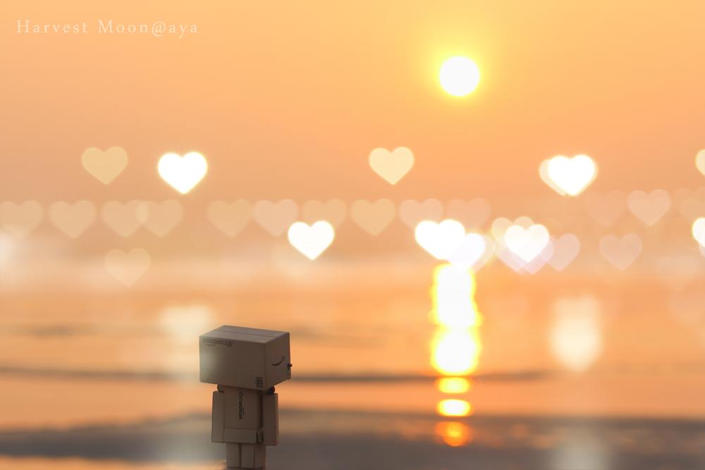 愛を込めて_b0208495_2321555.jpg